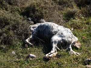Ενας φρικτός θάνατος και πολύ άδικος !!