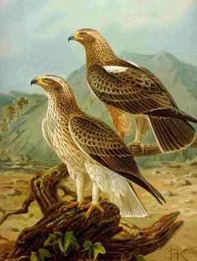 Φυσικούς τρόπους για να πάρει ένα μεγάλο πουλί